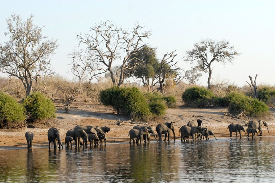 Botswana prestiges voyages, comment bien se préparer ?