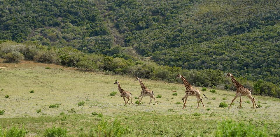 Partir à la recherche des meilleures destinations safaris en Afrique